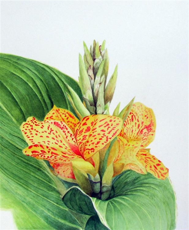 Canna Lily - Elizabeth Ballantyne - Watercolour